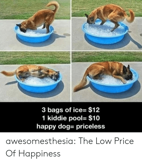 priceless: 3 bags of ice- $12  1 kiddie pool- $10  happy dog- priceless awesomesthesia:  The Low Price Of Happiness