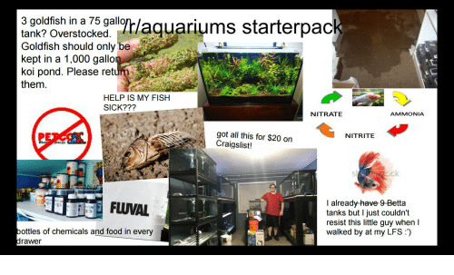 Craigslist, Food, and Goldfish: 3 goldfish in a 75 gallo  tank? Overstocked  Goldfish should only be  kept in a 1,000 gallon  koi pond. Please retur  them.  HELP IS MY FISH  SICK???  NITRATE  AMMONIA  got all this for $20 orn  Craigslist!  NITRITE  I already-have 9-Betta  tanks but I just couldn't  resist this little guy when l  walked by at my LFS)  ottles of chemicals and food in every  rawer