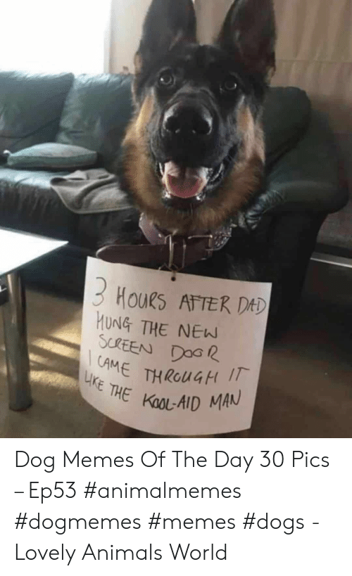 Memes Dogs: 3 HouRs ATTER DAD  HUNG THE NEW  SCREEN DOG  AME THROUGH I  LIKE THE KOOL-AID MAN Dog Memes Of The Day 30 Pics – Ep53 #animalmemes #dogmemes #memes #dogs - Lovely Animals World
