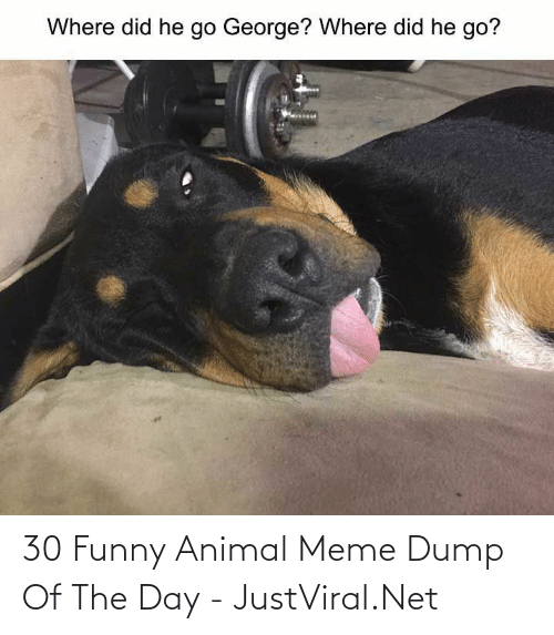 Of The Day: 30 Funny Animal Meme Dump Of The Day - JustViral.Net