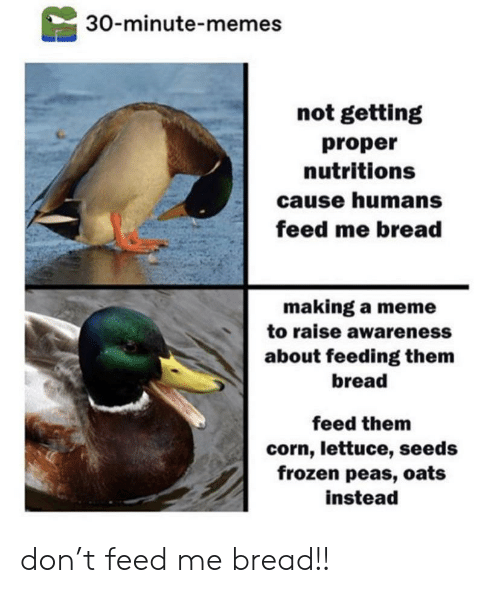Making A Meme: 30-minute-memes  not getting  proper  nutritions  cause humans  feed me bread  making a meme  to raise awareness  about feeding them  bread  feed them  corn, lettuce, seeds  frozen peas, oats  instead don't feed me bread!!