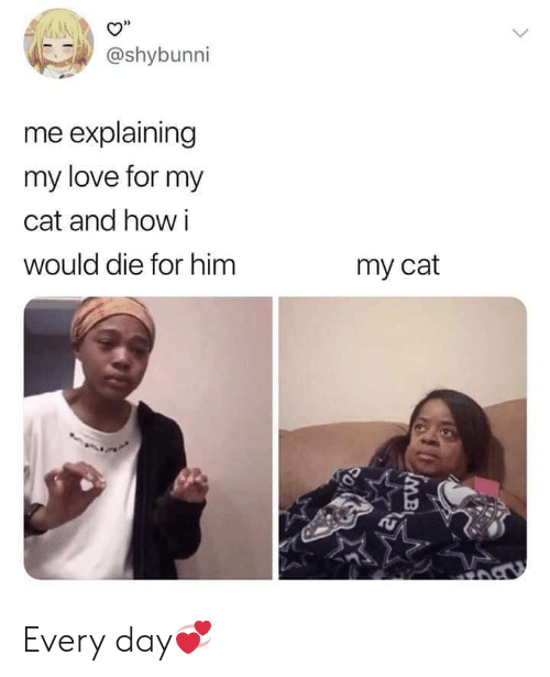 "Love, How, and Cat: 32  O""  @shybunni  me explaining  my love for my  cat and how i  would die for him  my cat Every day💞"