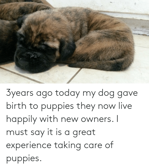Owners: 3years ago today my dog gave birth to puppies they now live happily with new owners. I must say it is a great experience taking care of puppies.