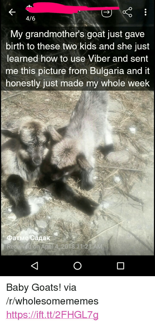 """Goat, How To, and Kids: 4/6  My grandmother's goat just gave  birth to these two kids and she just  learned how to use Viber and sent  me this picture trom Bulgaria and it  honestly just made my whole week  Фатме садак  April 4 2018 11:21 AM <p>Baby Goats! via /r/wholesomememes <a href=""""https://ift.tt/2FHGL7g"""">https://ift.tt/2FHGL7g</a></p>"""