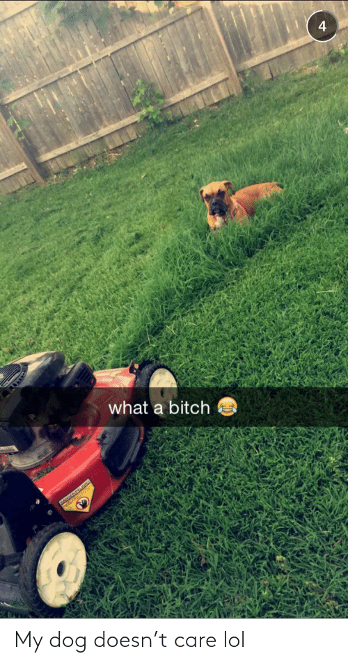 care: 4  what a bitch  DANGERPEIGAO My dog doesn't care lol