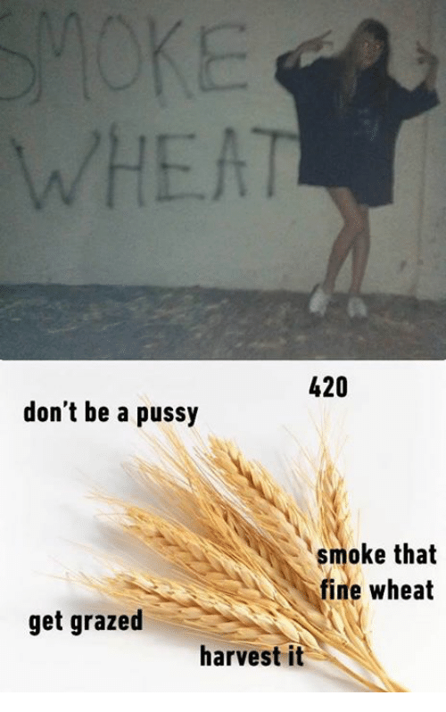 Dont Be A Pussy: 420  don't be a pussy  smoke that  fine wheat  get grazed  harvest it