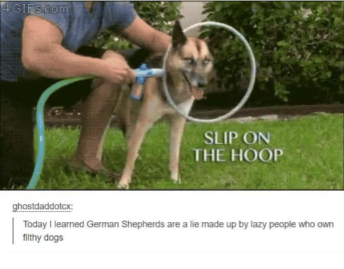 Lazy People: 4G IFS co m  SLIP ON  THE HOOP  ghostdaddotcx:  Today learned German Shepherds are a lie made up by lazy people who own  filthy dogs