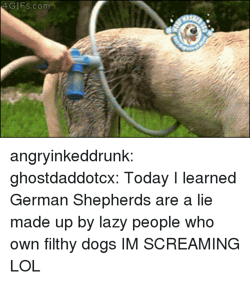 Dogs, Lazy, and Lol: 4GIFs.com angryinkeddrunk: ghostdaddotcx:  Today I learned German Shepherds are a lie made up by lazy people who own filthy dogs  IM SCREAMING LOL