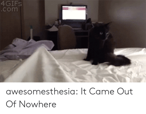 Tumblr, Blog, and Com: 4GIFS  .com awesomesthesia:  It Came Out Of Nowhere