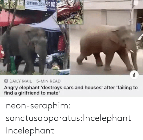 Daily Mail: 5公生号n兴隆之  i  DAILY MAIL 5-MIN READ  Angry elephant 'destroys cars and houses' after 'failing to  find a girlfriend to mate neon-seraphim:  sanctusapparatus:Incelephant  Incelephant