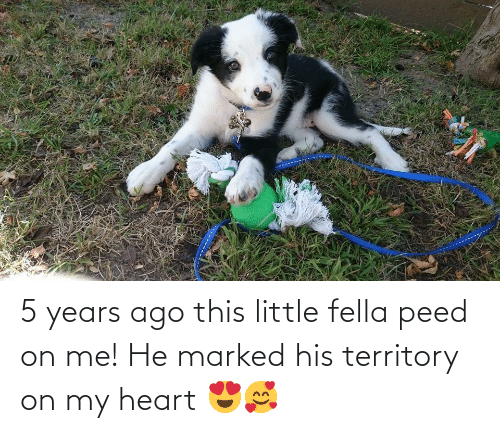 peed: 5 years ago this little fella peed on me! He marked his territory on my heart 😍🥰