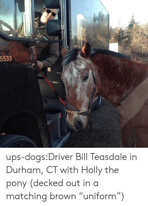"""pony: 5533  o9 ups-dogs:Driver Bill Teasdale in Durham, CT with Holly the pony (decked out in a matching brown """"uniform"""")"""