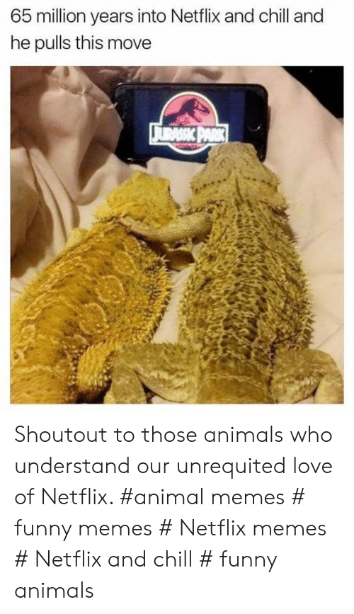 Netflix and chill: 65 million years into Netflix and chill and  he pulls this move Shoutout to those animals who understand our unrequited love of Netflix. #animal memes # funny memes # Netflix memes # Netflix and chill # funny animals