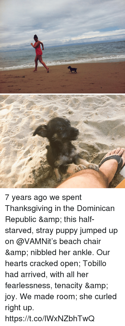 Memes, Thanksgiving, and Beach: 7 years ago we spent Thanksgiving in the Dominican Republic & this half-starved, stray puppy jumped up on @VAMNit's beach chair & nibbled her ankle. Our hearts cracked open; Tobillo had arrived, with all her fearlessness, tenacity & joy. We made room; she curled right up. https://t.co/lWxNZbhTwQ