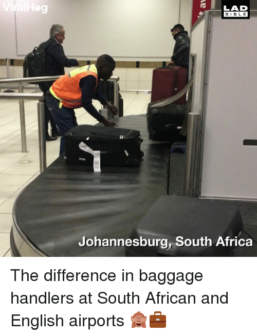 Africa, Memes, and Bible: 9  LAD  BIBLE  Johannesburg, South Africa The difference in baggage handlers at South African and English airports 🙈💼