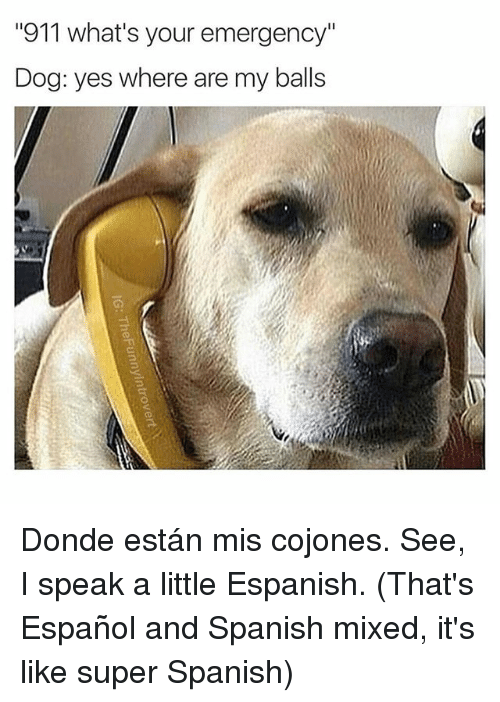 "Spanish, Espanol, and Dank Memes: ""911 what's your emergency""  Dog: yes where are my balls Donde están mis cojones. See, I speak a little Espanish. (That's Español and Spanish mixed, it's like super Spanish)"