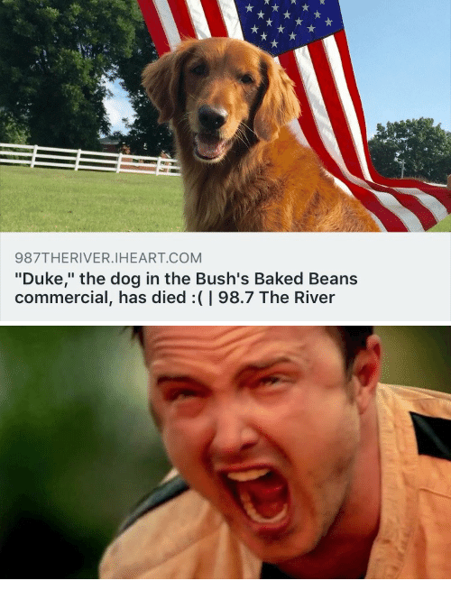 "Baked, Duke, and Dog: 987THERIVER.IHEART.COM  ""Duke,"" the dog in the Bush's Baked Beans  commercial, has died:(