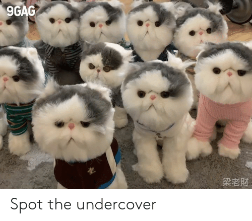 undercover: 9GAG  梁老財 Spot the undercover