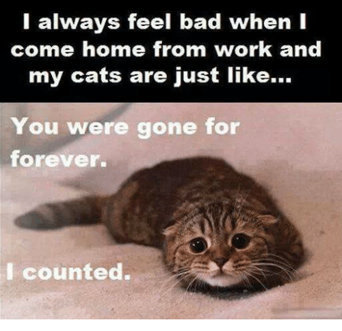 You Were Gone For Forever I Counted: I always feel bad when I  come home from work and  my cats are just like...  You were gone for  forever.  I counted.