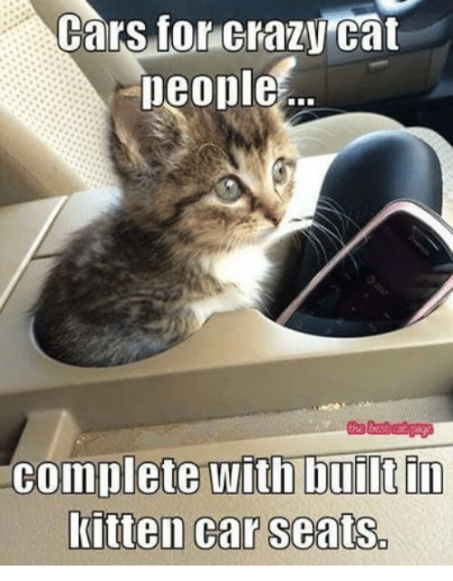 Dage: Cars for Crazy Cat  people  the best cat Dage  complete with built in  kitten car seats.