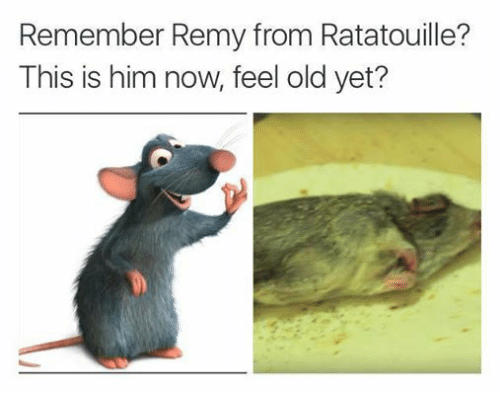 Remember Remy From Ratatouille This Is Him Now Feel Old Yet Ratatouille Meme On Esmemes Com