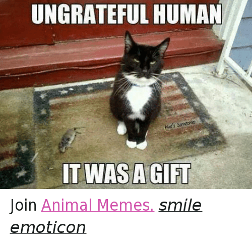 Meme Smile: UNGRATEFUL HUMAN  Kats S  IT WAS A GIFT Join Animal Memes. smile emoticon