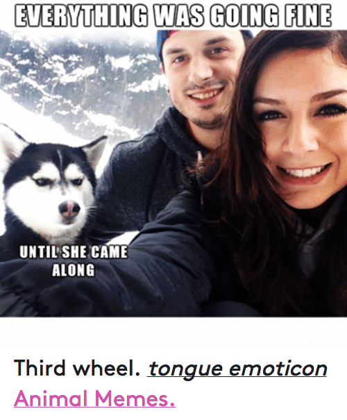 Animation Meme: EVERYTHING WAS GOING FINE  UNTIL SHE CAME  ALONG Third wheel. tongue emoticon  Animal Memes.