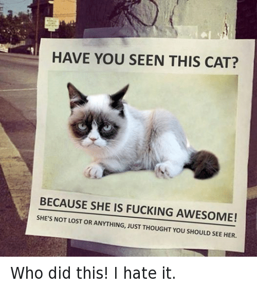 Have You Seen This Cat
