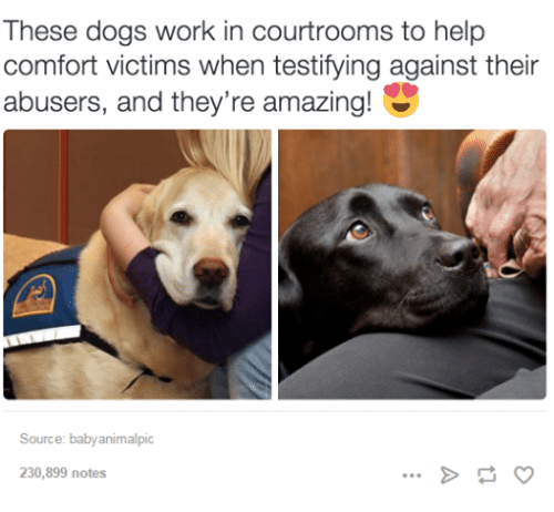 Baby Animal: These dogs work in courtrooms to help  comfort victims when testifying against their  abusers, and they're amazing  Source: baby animal pic  230,899 notes