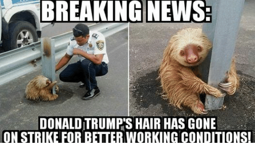 Donald Trump, News, and Work: BREAKING NEWS  DONALD TRUMPS HAIR HAS GONE  ON STRIKE FOR BETTER WORKING CONDITIONS!