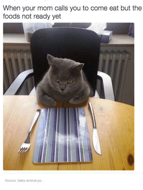 Baby Animal: When your mom calls you to come eat but the  foods not ready yet  Source: baby-animal-po.