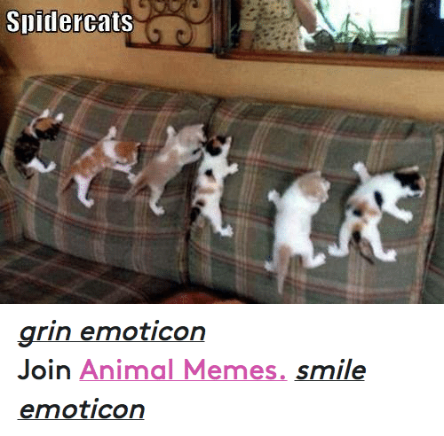Meme Smile: Slidercats grin emoticon  Join Animal Memes. smile emoticon