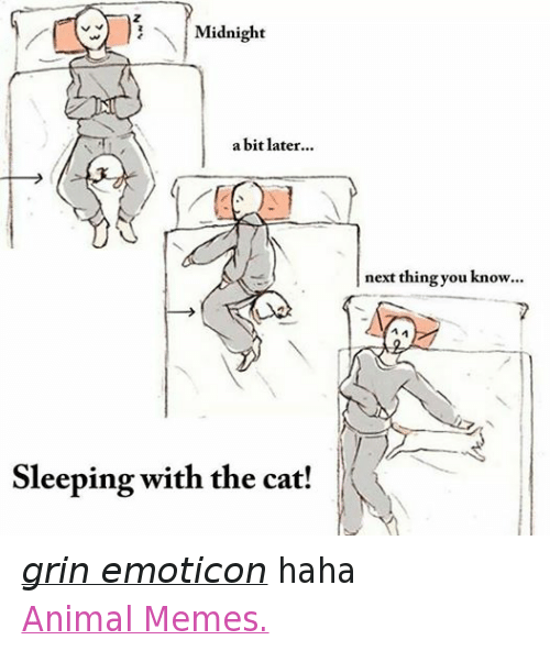 Animation Meme: Midnight  a bit later  Sleeping with the cat!  next thing you know... grin emoticon haha  Animal Memes.