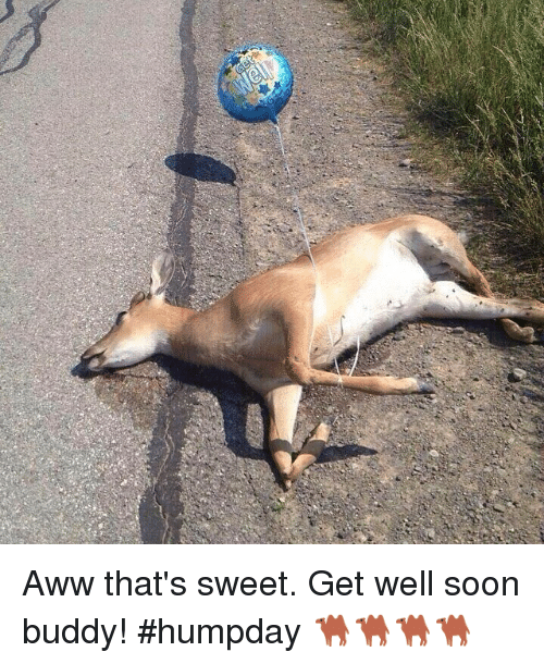 Aww That's Sweet Get Well Soon Buddy! Humpday 🐫🐫🐫🐫 | Aww