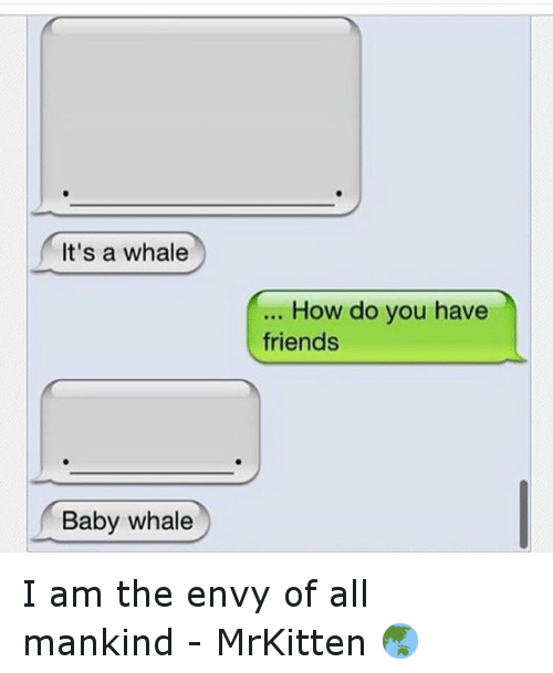 Baby, It's Cold Outside, Friends, and Funny: It's a whale  Baby whale  How do you have  friends I am the envy of all mankind - MrKitten 🌏