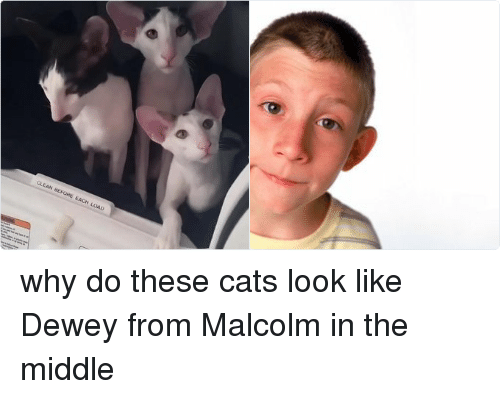 Malcolm in the Middle: CLEAN BEFORE EACH LOAD why do these cats look like Dewey from Malcolm in the middle