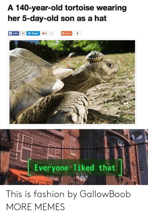 tortoise: A 140-year-old tortoise wearing  her 5-day-old son as a hat  Share  Tweet G+ 0  Like 33  6  Everyone 1iked that  24 This is fashion by GallowBoob MORE MEMES