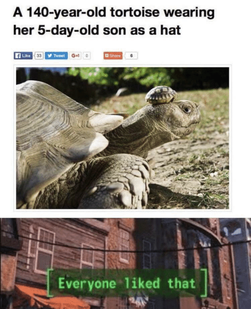Liked: A 140-year-old tortoise wearing  her 5-day-old son as a hat  Like 33 Tweet G+10  Share 6  Everyone liked that