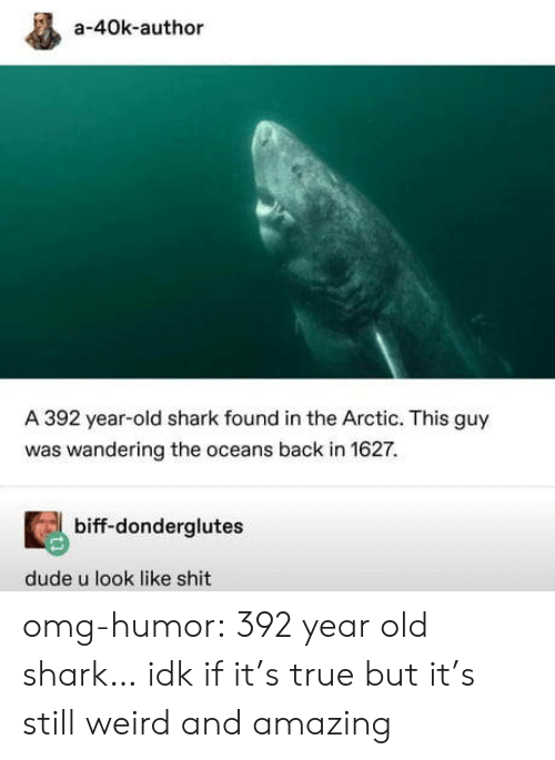 Dude, Omg, and Shit: a-40k-author  A 392 year-old shark found in the Arctic. This guy  was wandering the oceans back in 1627.  biff-donderglutes  dude u look like shit omg-humor:  392 year old shark… idk if it's true but it's still weird and amazing