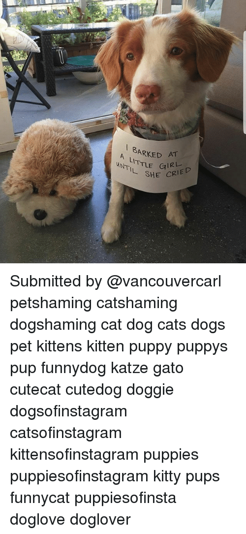 Cats, Dogs, and Memes: A ARKED AT  A LITTLE  SHE CRIED Submitted by @vancouvercarl petshaming catshaming dogshaming cat dog cats dogs pet kittens kitten puppy puppys pup funnydog katze gato cutecat cutedog doggie dogsofinstagram catsofinstagram kittensofinstagram puppies puppiesofinstagram kitty pups funnycat puppiesofinsta doglove doglover