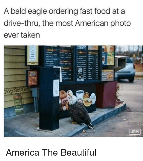 Urm: A bald eagle ordering fast food at a  drive-thru, the most American photo  ever taken  op  URM <p>America The Beautiful</p>