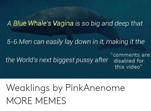 "Dank, Memes, and Pussy: A Blue Whale's Vagina is so big and deep that  5-6 Men can easily lay down in it, making it the  the World's next biggest pussy after disabled for  ""comments are  this video"" Weaklings by PinkAnenome MORE MEMES"