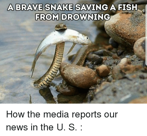 A brave snake saving a fish from drowning news meme on for Saving fish from drowning