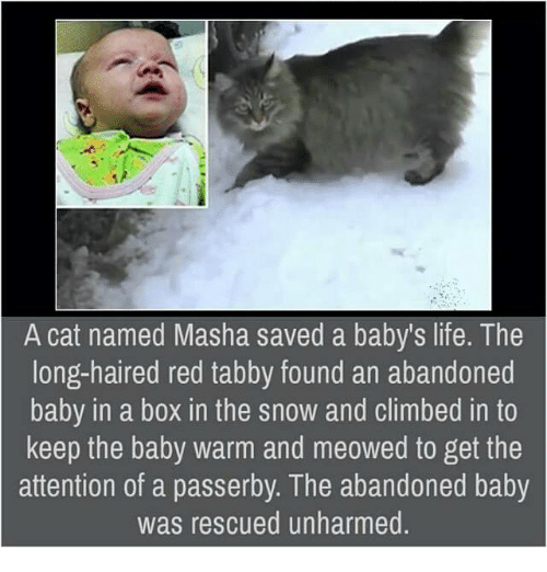 Boxing, Climbing, and Memes: A cat named Masha saved a baby's life. The  long-haired red tabby found an abandoned  baby in a box in the snow and climbed in to  keep the baby warm and meowed to get the  attention of a passerby. The abandoned baby  was rescued unharmed