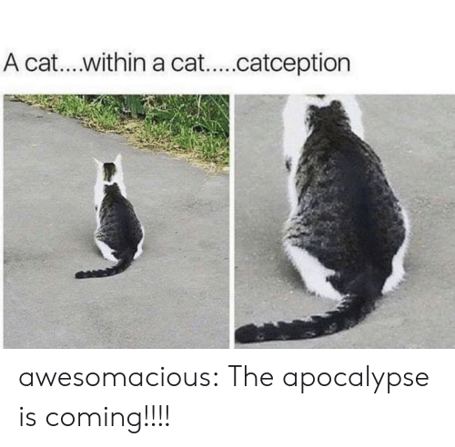 Tumblr, Blog, and Cat: A cat.. within a cat...catception awesomacious:  The apocalypse is coming!!!!
