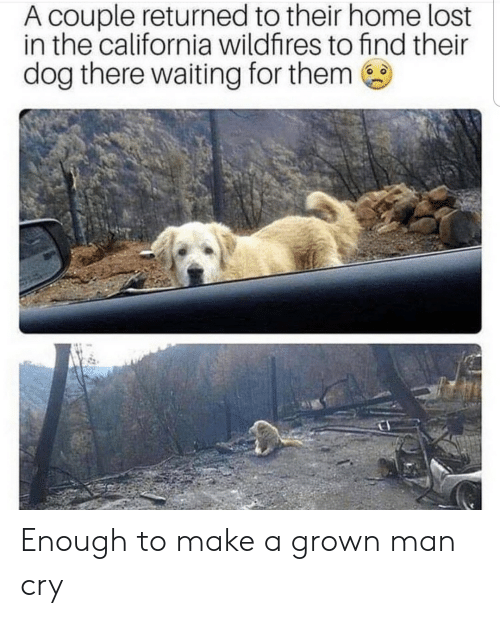 Lost, California, and Home: A couple returned to their home lost  in the california wildfires to find their  dog there waiting for them Enough to make a grown man cry