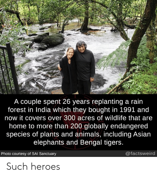 sai: A couple spent 26 years replanting a rain  forest in India which they bought in 1991 and  now it covers over 300 acres of wildlife that are  home to more than 200 globally endangered  species of plants and animals, including Asian  elephants and Bengal tigers.  @factsweird  Photo courtesy of SAI Sanctuary Such heroes