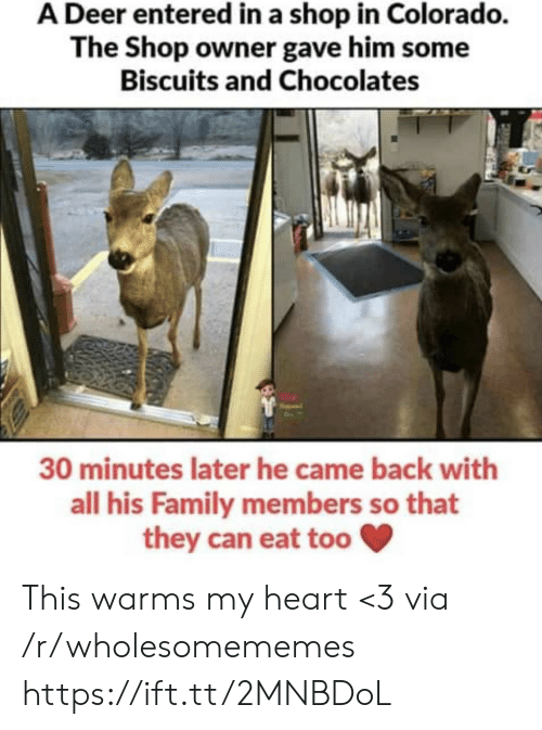 Deer: A Deer entered in a shop in Colorado.  The Shop owner gave him some  Biscuits and Chocolates  30 minutes later he came back with  all his Family members so that  they can eat too This warms my heart <3 via /r/wholesomememes https://ift.tt/2MNBDoL