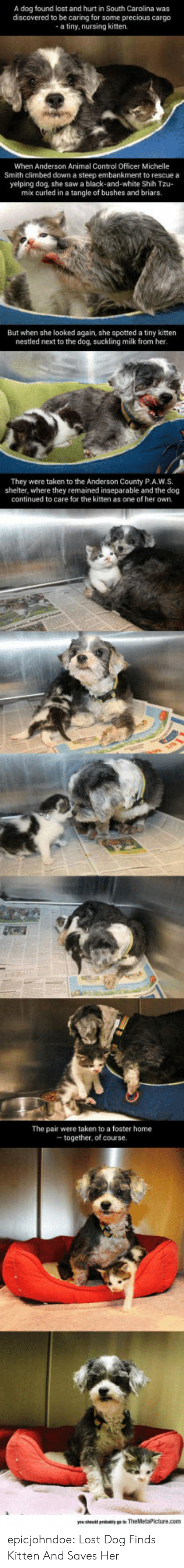 carolina: A dog found lost and hurt in South Carolina was  discovered to be caring for some precious cargo  a tiny, nursing kitten.  When Anderson Animal Control Officer Michelle  Smith climbed down a steep embankment to rescue a  yelping dog, she saw a black-and-white Shih Tzu-  mix curled in a tangle of bushes and briars.  But when she looked again, she spotted a tiny kitten  nestled next to the dog, suckling milk from her  They were taken to the Anderson County P.A.W.S.  shelter, where they remained inseparable and the dog  continued to care for the kitten as one of her own.  The pair were taken to a foster home  together, of course epicjohndoe:  Lost Dog Finds Kitten And Saves Her