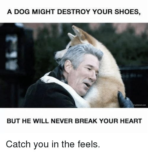 break your heart: A DOG MIGHT DESTROY YOUR SHOES,  @o  BUT HE WILL NEVER BREAK YOUR HEART Catch you in the feels.